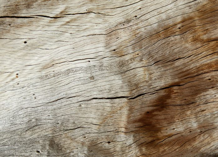 textured old wood with cracks and tiny holes